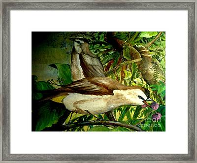 Bird From Bali  Framed Print
