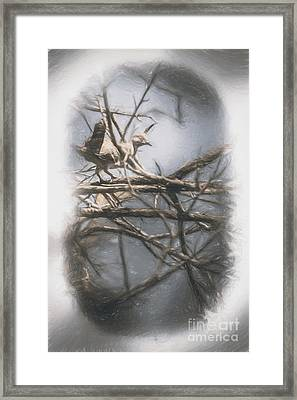 Bird From Woodslost Way Framed Print by Jorgo Photography - Wall Art Gallery