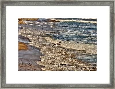 Framed Print featuring the pyrography Bird Gliding Over Seashore by Julis Simo