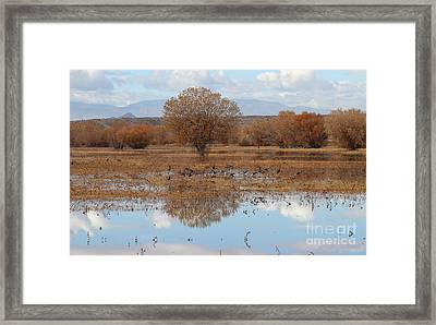 Framed Print featuring the photograph Bird Heaven by Ruth Jolly