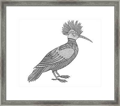 Bird Hoopoe Framed Print by Neeti Goswami