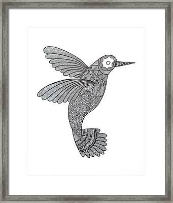 Bird Hummingbird Framed Print by Neeti Goswami