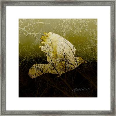 Bird IIi Framed Print by Ann Powell