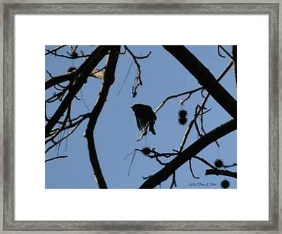 Framed Print featuring the photograph Bird In Flight by Tara Potts
