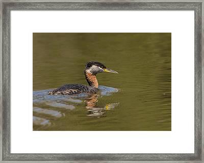 Bird In Pond Framed Print