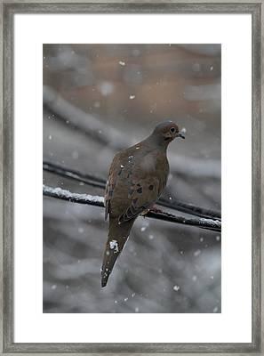 Bird In Snow - Animal - 01131 Framed Print