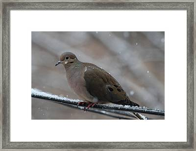 Bird In Snow - Animal - 011310 Framed Print by DC Photographer