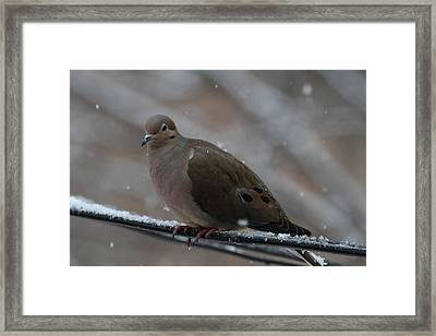 Bird In Snow - Animal - 011311 Framed Print by DC Photographer