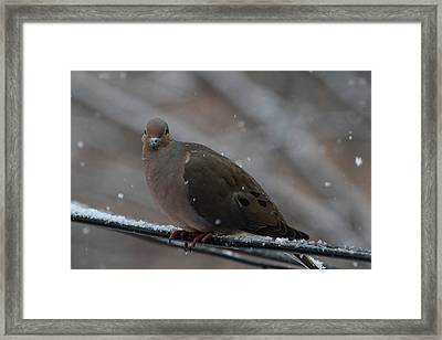 Bird In Snow - Animal - 011312 Framed Print by DC Photographer