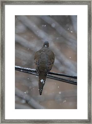 Bird In Snow - Animal - 01135 Framed Print by DC Photographer