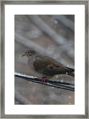 Bird In Snow - Animal - 01136 Framed Print by DC Photographer