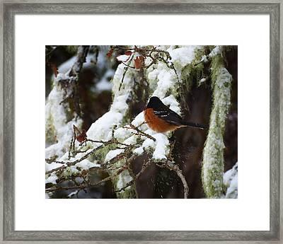 Bird In Snow Framed Print