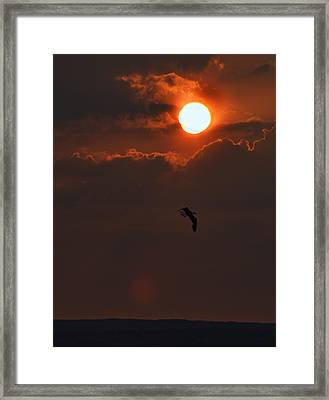 Bird In Sunset Framed Print by Tony Reddington