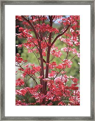 Bird In The Dogwood Tree Framed Print by Carol Groenen