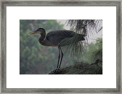 Bird In Tree Framed Print