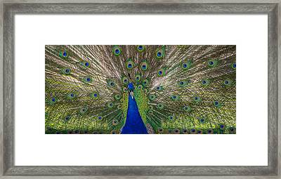 Bird Is The Word Framed Print by Kristopher Schoenleber