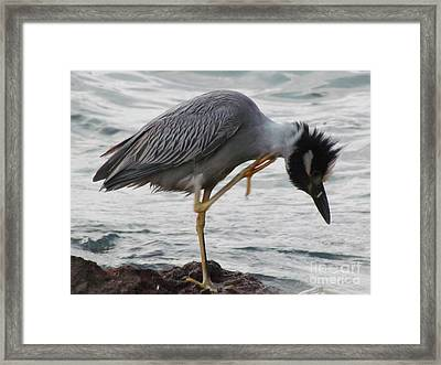 Bird Itch Framed Print