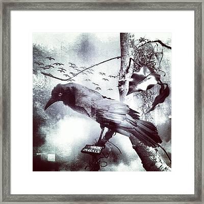 #bird Looking For #birdbath . #surreal Framed Print