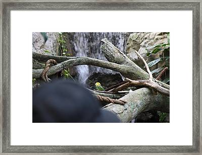 Bird - National Aquarium In Baltimore Md - 121212 Framed Print by DC Photographer