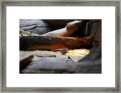 Bird - National Aquarium In Baltimore Md - 121216 Framed Print by DC Photographer
