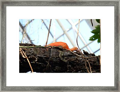 Bird - National Aquarium In Baltimore Md - 12123 Framed Print by DC Photographer