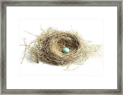 Bird Nest 2 Framed Print