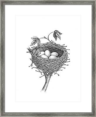 Bird Nest Framed Print by Christy Beckwith
