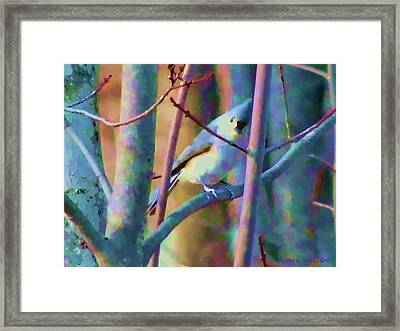 Bird Of Another Color Framed Print by Debra     Vatalaro