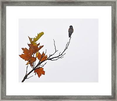 Framed Print featuring the photograph Bird Of Autumn by AJ  Schibig