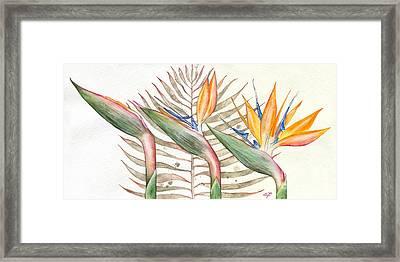 Bird Of Paradise 05 Elena Yakubovich Framed Print by Elena Yakubovich
