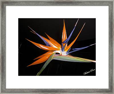 Bird Of Paradise Beauty 4 Framed Print