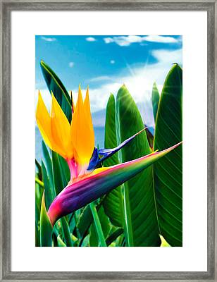 Bird Of Paradise 5 Framed Print