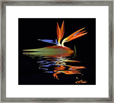 Bird Of Paradise Flood Framed Print by Geraldine Alexander