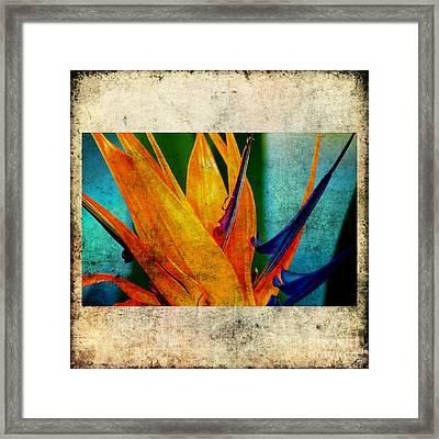 Bird Of Paradise Flower 1 Framed Print by Susanne Van Hulst
