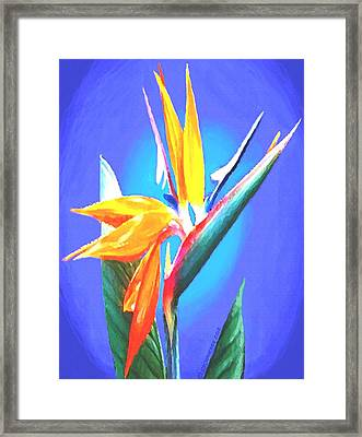Bird Of Paradise Flower Framed Print by Sophia Schmierer