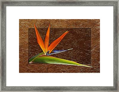 Bird Of Paradise Gold Leaf Framed Print