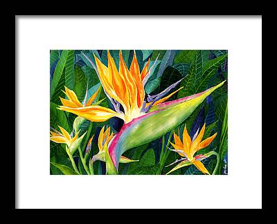 Heliconia Framed Prints