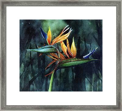 Bird Of Paradise Framed Print by John Christopher Bradley
