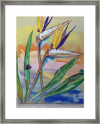 Bird Of Paradise Framed Print by Karen Carnow