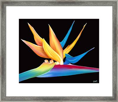 Bird Of Paradise Framed Print by Laura Bell