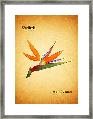 Bird Of Paradise Framed Print by Mark Rogan