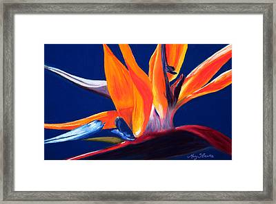 Bird Of Paradise Framed Print by Mary Benke