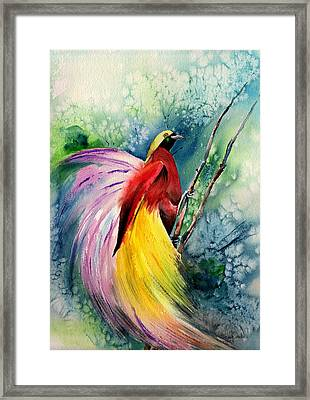 Bird Of Paradise New-guinea Framed Print by Isabel Salvador