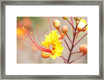 Bird Of Paradise Profile Framed Print