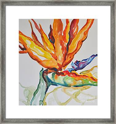 Bird Of Paradise Framed Print by Roger Parent