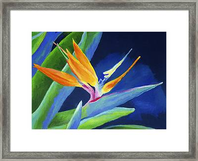 Bird Of Paradise Framed Print by Stephen Anderson