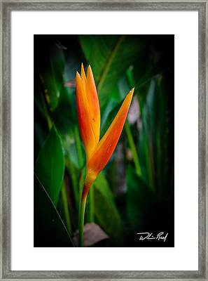 Bird Of Paradise Framed Print by William Reek