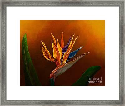 Bird Of Paradise Framed Print by Zina Stromberg