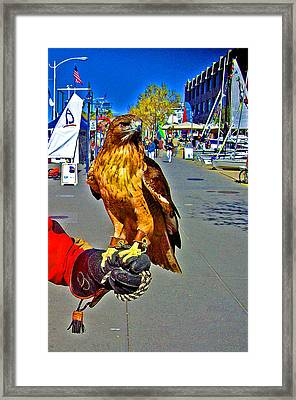 Bird Of Prey At Boat Show 2013 Framed Print by Joseph Coulombe