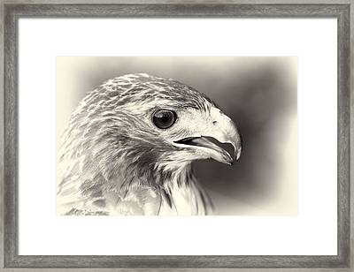 Bird Of Prey Framed Print by Dan Sproul